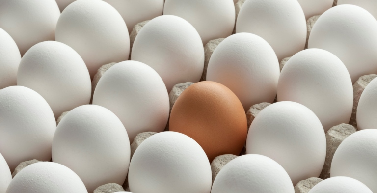 Organic white eggs and one brown in carton crate